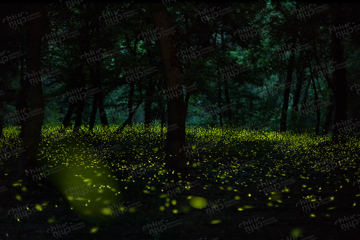 Italy - Countryside Glowworm