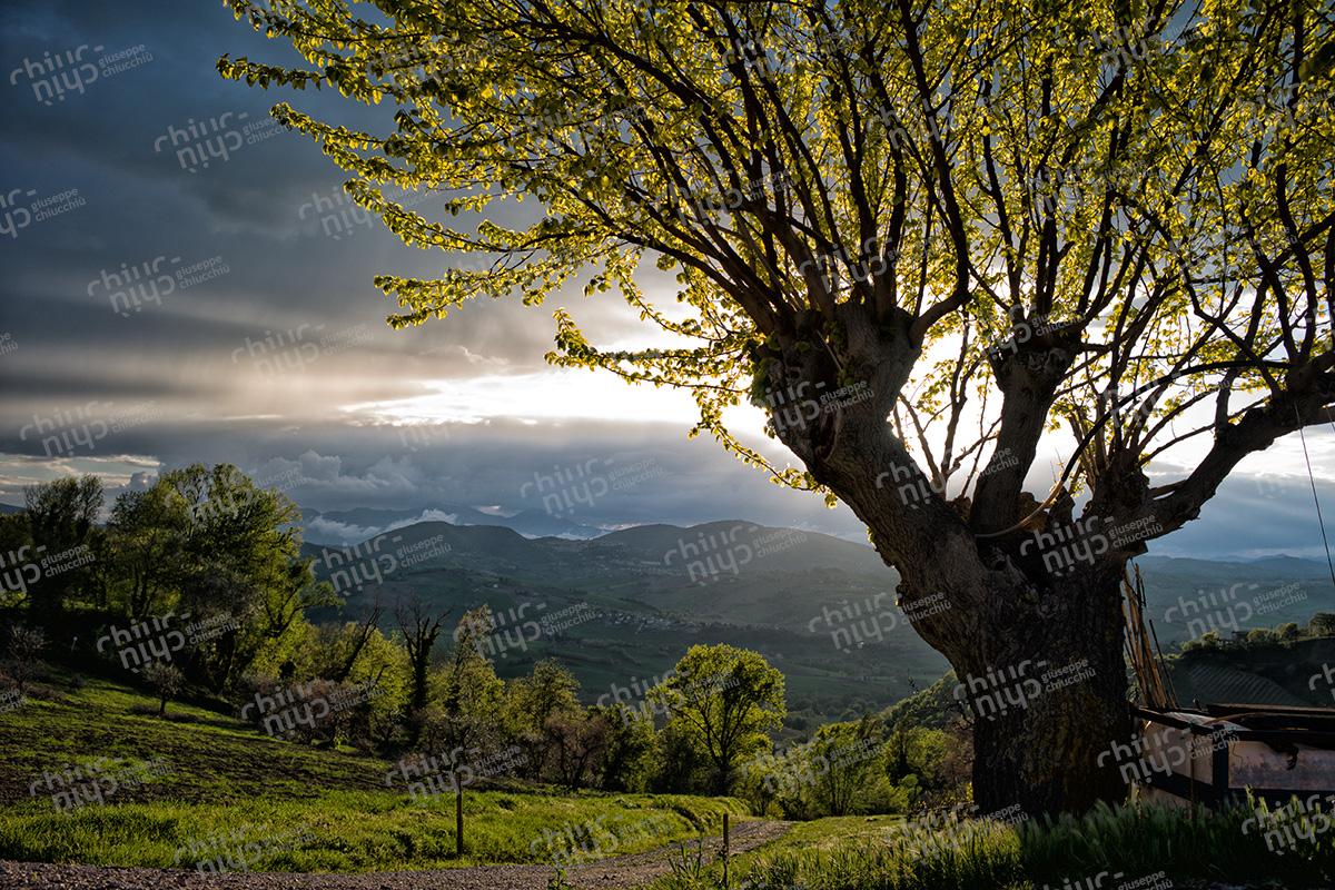 Italy - Marche landscape