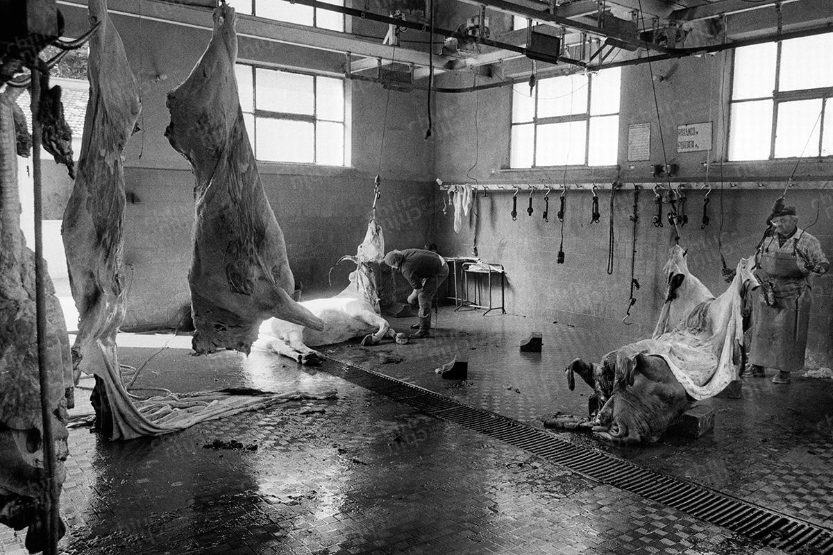 Italy - Slaughterhouse hinterland
