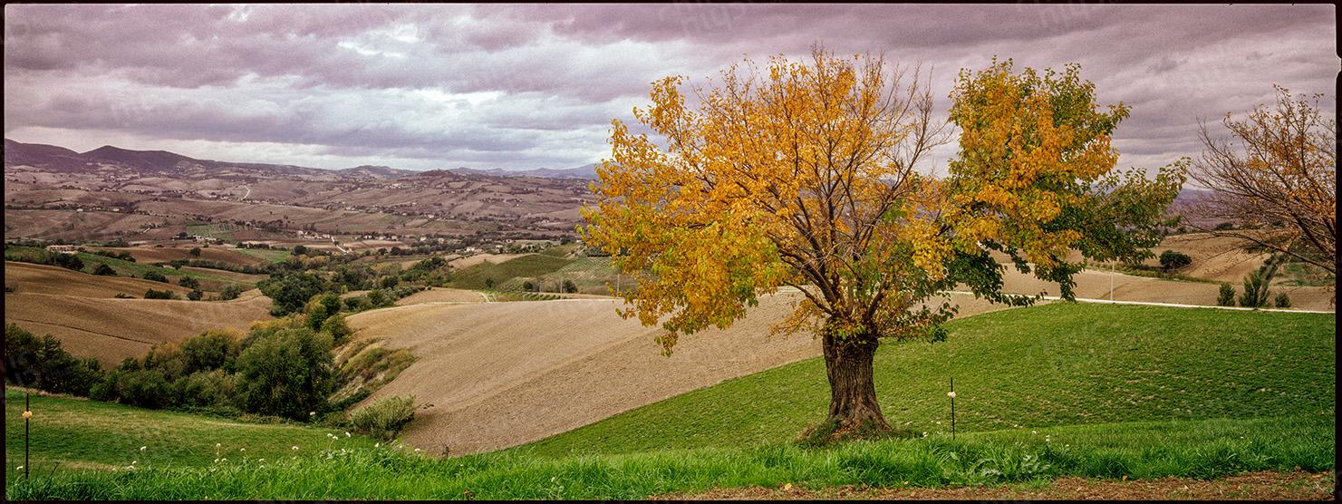 Italy - The silk tree